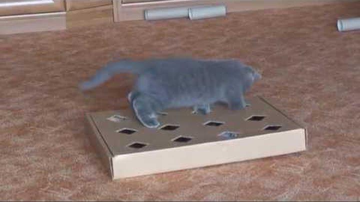Видео как сделать игрушку для кошки своими руками - Njkmznnb.ru