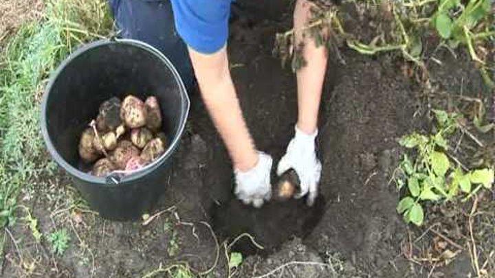 pizda-razvel-video
