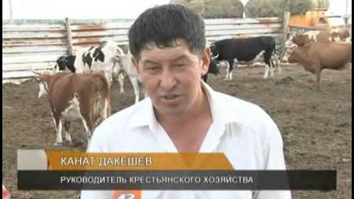 """Крестьянского хозяйства убил глава своего знакомого """"нурдаулет"""""""