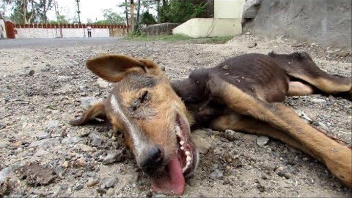 Спасение бнздомных животных видео