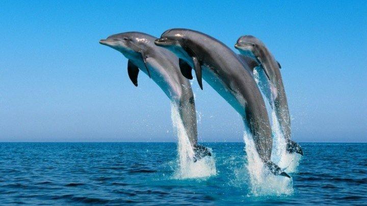 Эти дельфины подарят вам улыбку!