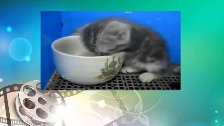 Котэ отжигает. Котенок засыпает прямо в миске.