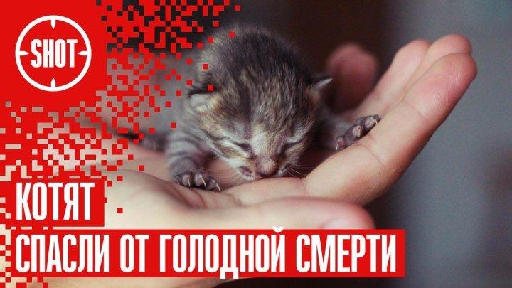 спасите котят картинка подключения карты памяти