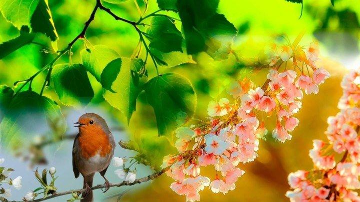 Прогулка по весеннему лесу под пение птиц. Первые весенние цветы. Соловьи