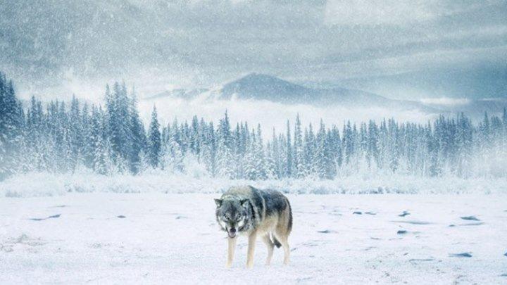 Вечная зима 2018 HD
