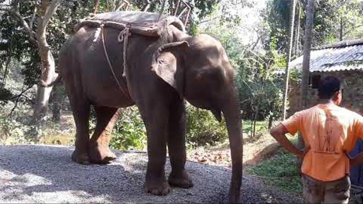 🌹ГОА🌴БОЛЬШОЙ Индийский 🐘. Катание на слоне 🐘. СЕВЕРНЫЙ ГОА. ИНДИЯ. ЗИМА В ИНДИИ. КАНАЛ ТУТСИ.