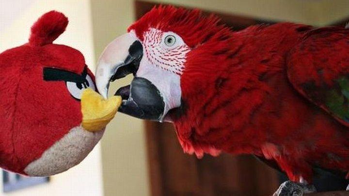 Танцуй вместе с попугаем!