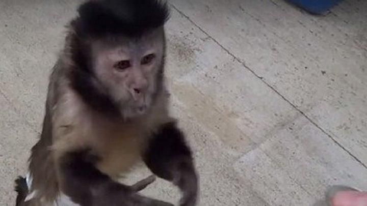 Парень дал обезьянке монетку. То, что произойдет дальше сложно объяснить словами….