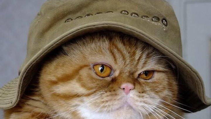 Коты – супергерои! )))))