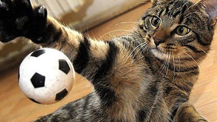 Этот кот срочно нужен нашей сборной по футболу