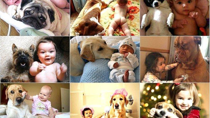 Вот что бывает, если оставить собаку наедине с ребенком. Ты растаешь при виде этих кадров!