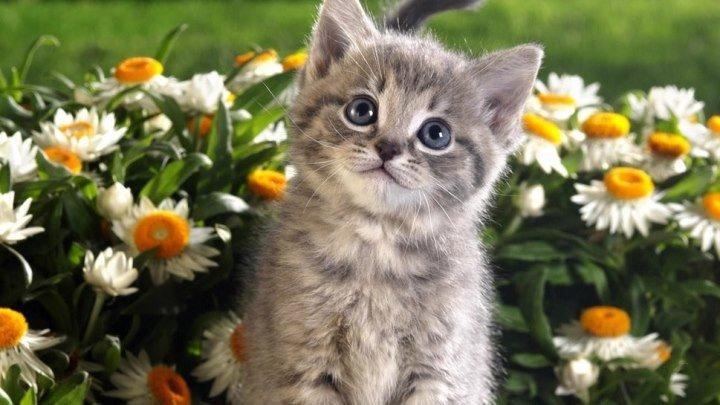 Самая любвеобильная кошка на свете! ))))))