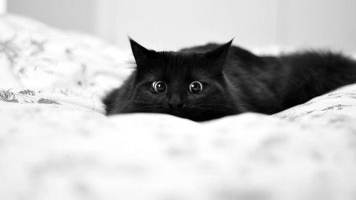 Испуганные коты