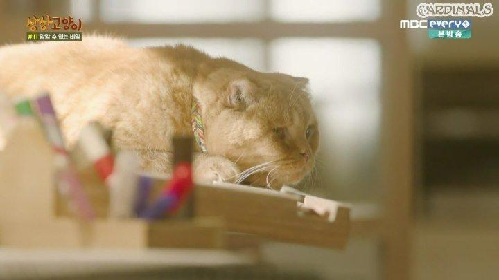 Кошка моей мечты - 6