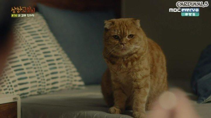 Кошка моей мечты - 8