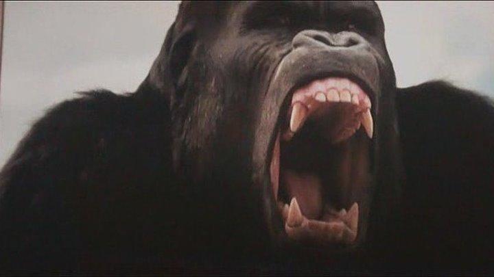 Восстание планеты обезьян (2011) смотреть онлайн
