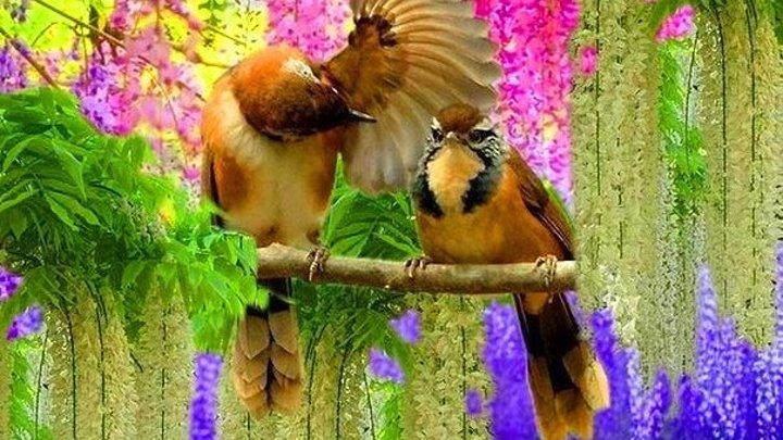 Красивая музыка и пение птиц