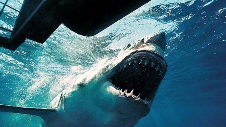акулы на свободе