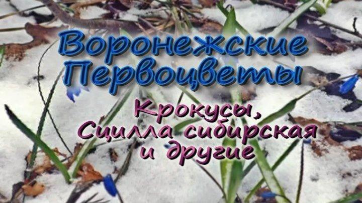 Воронежские Первоцветы