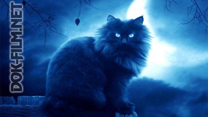 Раскрывая мистические тайны. Магия животного мира - DOK-FILM.NET