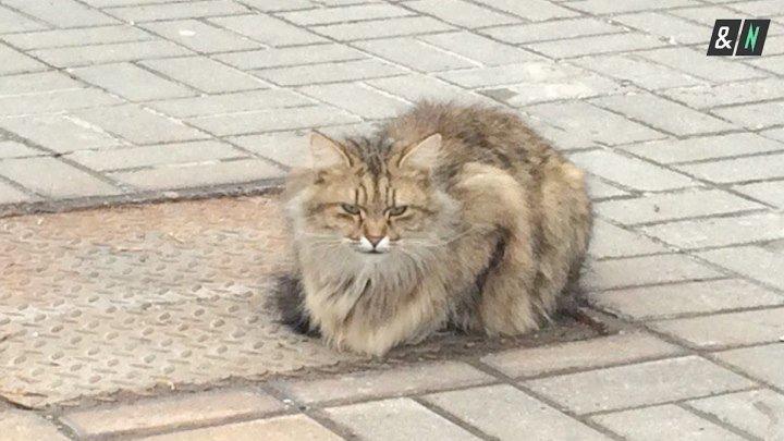 Кот-хатико в Белгороде ждет хозяев уже целый год