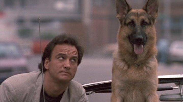 Собачья работа. 1989