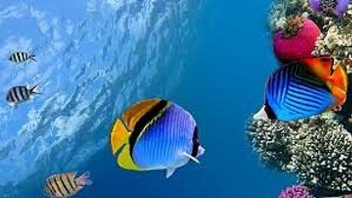 Тайны Тихого океана. BBC/ Ч-1