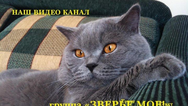 Чудесный котенок))))))