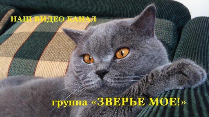 Котенок знакомится с ежиком