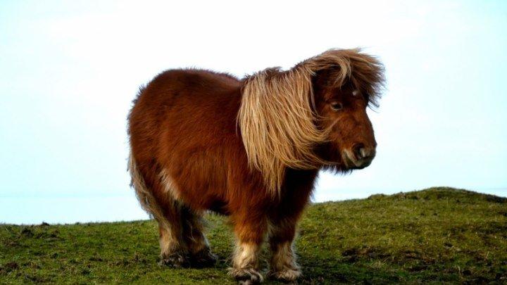 Мой милый пони