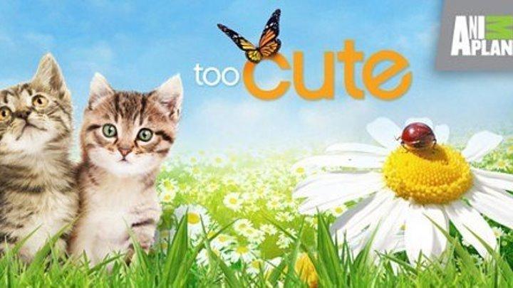 10 серия. Маленькие дикие кошки. Двухцветные, Трехцветные, Саваны