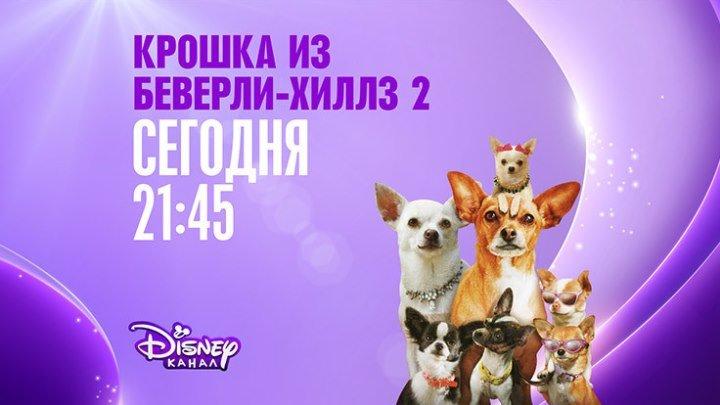 """Крошка из Беверли-Хиллз-2"" на Канале Disney!"