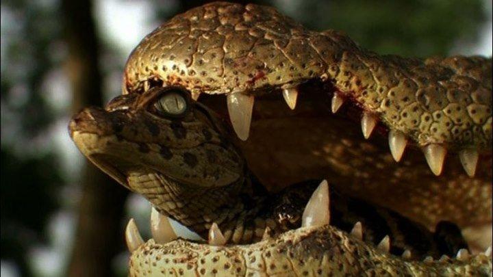Крокодилья мама ( документальный фильм)