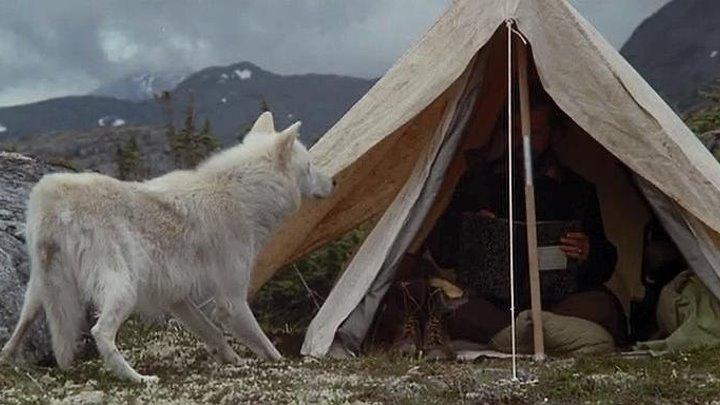 """""""Не зови ВОЛКОВ // Не кричи """"ВОЛКИ!"""" // Never Cry Wolf"""". 1983 Драма, приключения"""