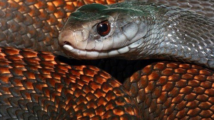 Самые опасные змеи в мире ( Документальный фильм)