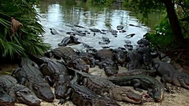 """Трагедия в парке """"Уолт Дисней"""": отец не смог отбить сына у крокодила"""