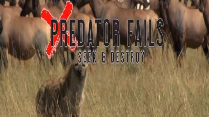 неудачи хищников (2 серия)
