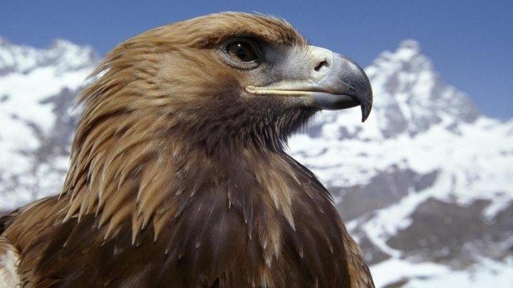 «Сила хищных птиц»