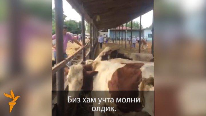 Аҳмадбойнинг фермаси талон-тарож қилинди