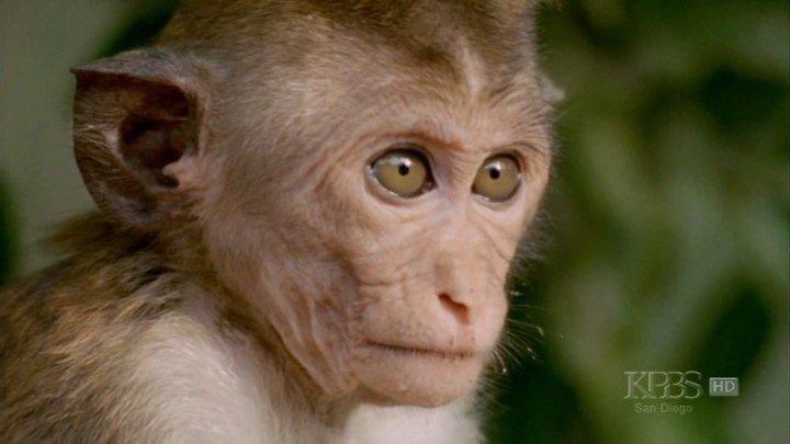 Умные обезьяны