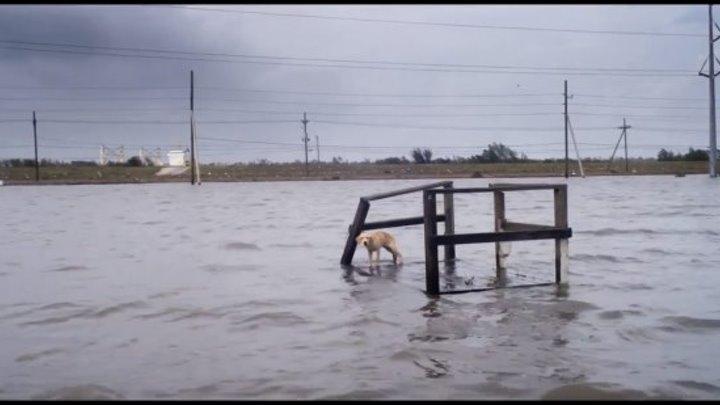 Ураган Одиссея ветра – Русский трейлер [2016 - документальный]