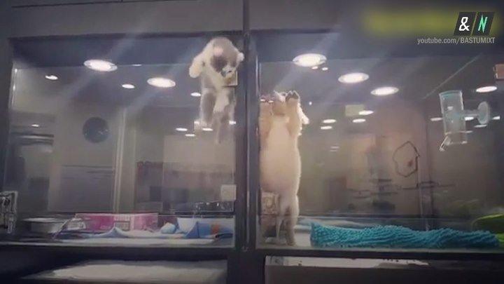 Котенок сходил в гости к щенку в зоомагазине