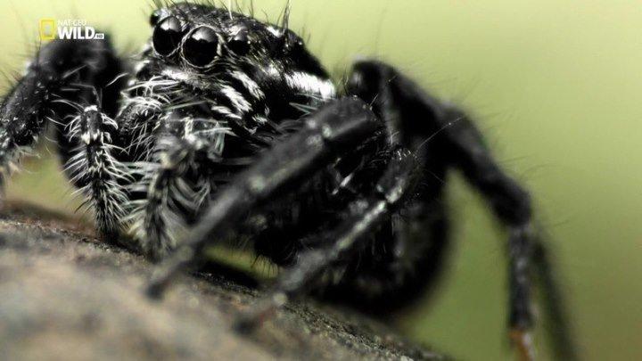 Удивительные пауки (2015) Документальный.