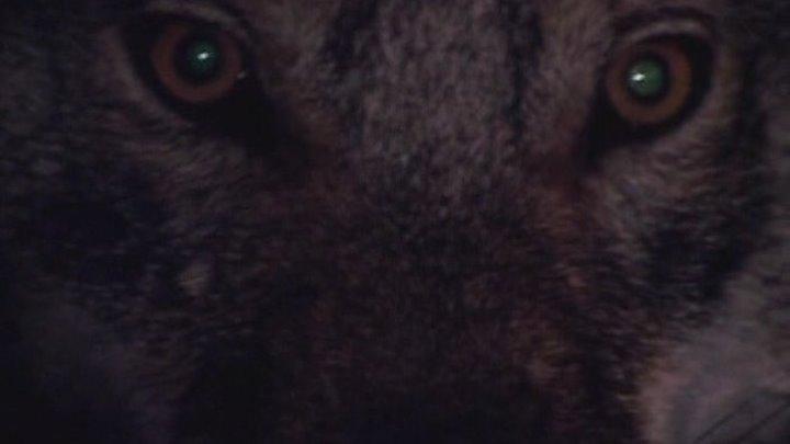 По ту сторону волков 3 серия