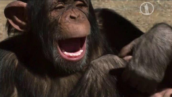 Самые милые животные (2015) Документальный.