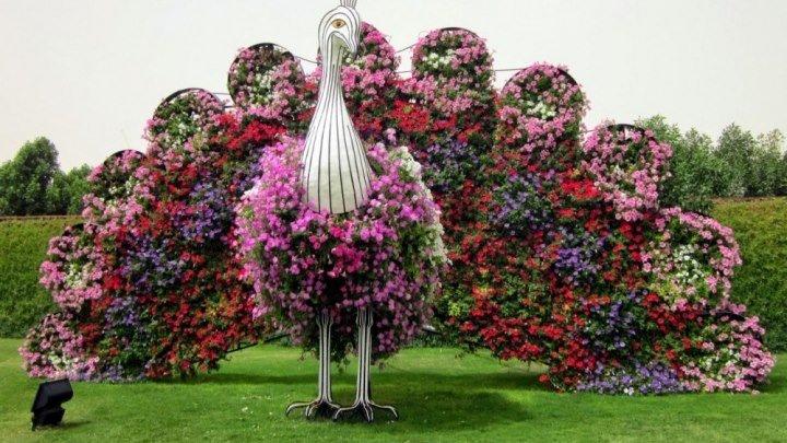 """""""Восьмое чудо света - Парк цветов в Дубае"""""""