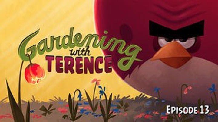 Angry Birds Toons - 13 серия (1 сезон 13 серия)