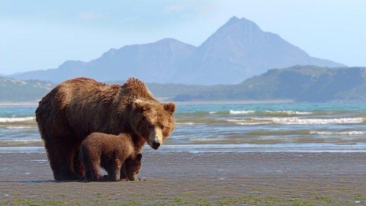 Медведи / DisneyNature: Bears (2014: Документальный, природа, фауна)