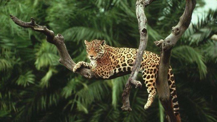 Амазония HD удивительный мир дикой природы 1080p