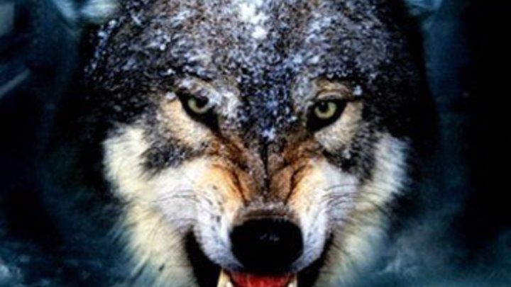 Одинокий Волк Нкарнер